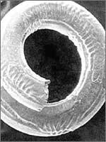 Пружинки, которым по 100 тысяч лет