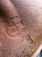 Свастика в качестве клейма на монгольской лошади