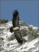 На высокой горе Монтсегюр слышался громкий и горестный плач орлов. Иллюстрация из книги Светланы Левашовой «Откровение»