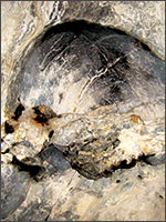 В углу пещеры маленький «камин», в котором ещё «стынут» окаменевшие угли. Иллюстрация из книги Светланы Левашовой «Откровение»
