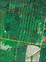 Рис.2. Лесные кварталы с просеками имеют прямоугольный вид