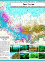 Рис.6. Карта лесов России