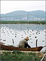 Японская жемчужная ферма